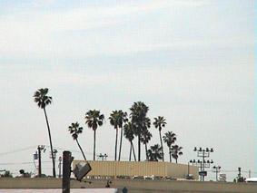 electric_palms.jpg